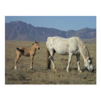Cartão Postal Égua e potro (cavalos)