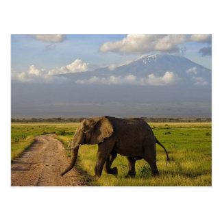 Cartão Postal Elefante africano