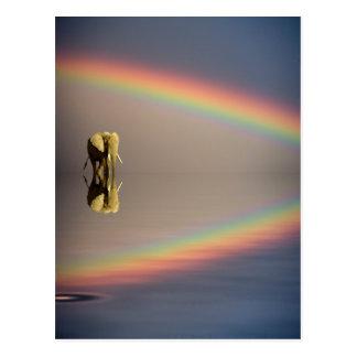 Cartão Postal Elefante, água, e arco-íris, Kenya
