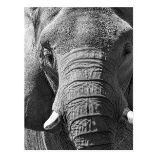Cartão Postal Elefante asiático em preto e branco
