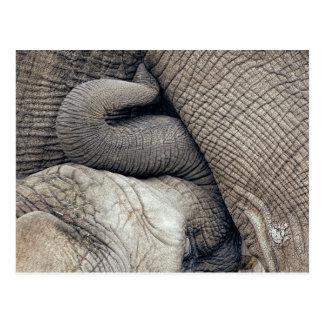Cartão Postal Elefante bonito do bebê dos cuidados criado ao