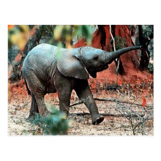 Cartão Postal Elefante do bebê