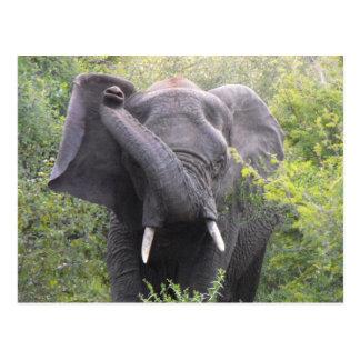 Cartão Postal Elefante irritado