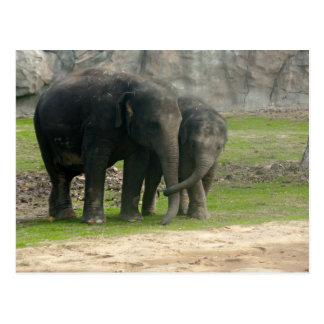 Cartão Postal Elefante Loe