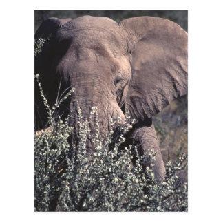 Cartão Postal Elefante - parque nacional de Etosha, Namíbia