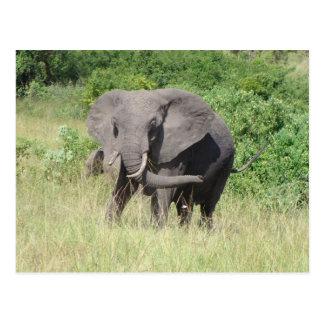 Cartão Postal Elefante Uganda África