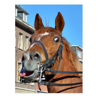 Cartão Postal Emoções do cavalo