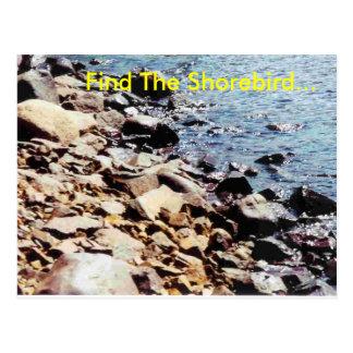 Cartão Postal Encontre o Shorebird…
