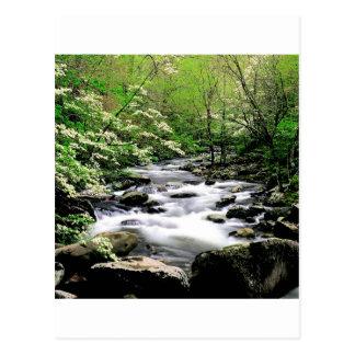 Cartão Postal Enfumaçado médio Tennesse de Prongdogwoods do rio