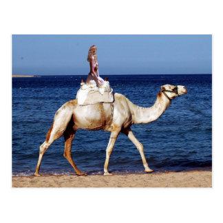 Cartão Postal Equitação do camelo na praia