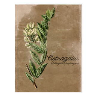 Cartão Postal Erva da flor do astrágalo do estilo do vintage