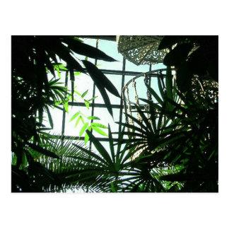 Cartão Postal Escadas botânicas