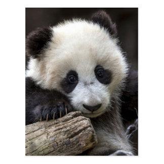 Cartão Postal Escalada da panda do bebê uma árvore