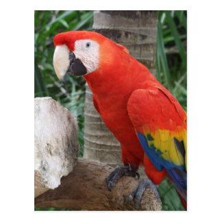 Cartão Postal Escarlate da fotografia do Macaw