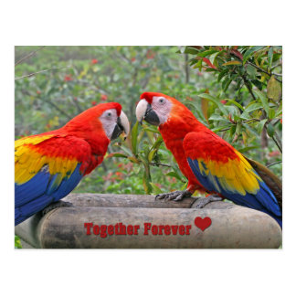 Cartão Postal Escarlate do casal feliz de Mackaws dos pássaros