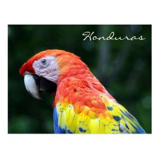 Cartão Postal escarlate do macaw honduras