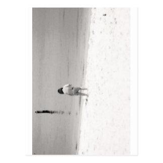 Cartão Postal Escudos do mar da caça da menina na praia