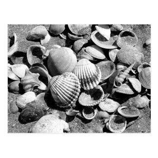 Cartão Postal escudos na praia