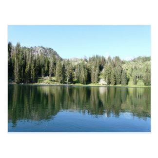 Cartão Postal espelho do pinheiro no lago