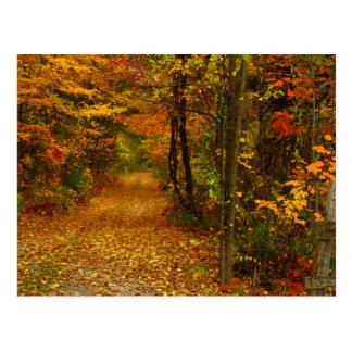 Cartão Postal Esplendor do outono em Nova Inglaterra