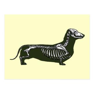 Cartão Postal esqueleto do dachshund