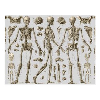 Cartão Postal Esqueletos da enciclopédia de Brockhaus & de Efron