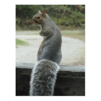 Cartão Postal esquilo
