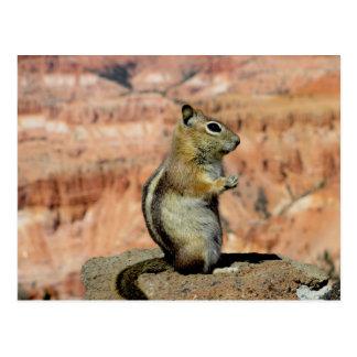 Cartão Postal Esquilo à terra envolvido ouro