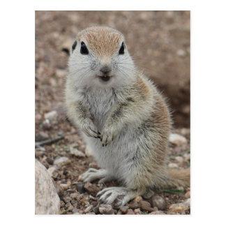 Cartão Postal Esquilo à terra Redondo-atado bebê