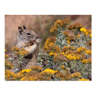Cartão Postal Esquilo & Chipmunk