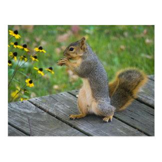 Cartão Postal Esquilo com biscoito, Squirrel/with cookie