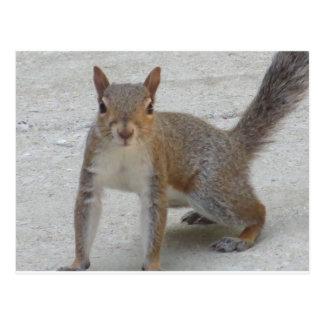 Cartão Postal Esquilo curioso