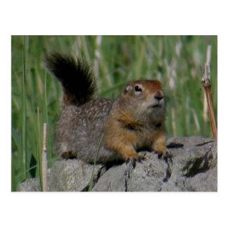 Cartão Postal Esquilo de Parkee que enfrenta certo, ilha de