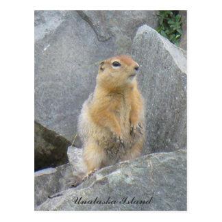 Cartão Postal Esquilo de Parkee que levanta-se, ilha de Unalaska