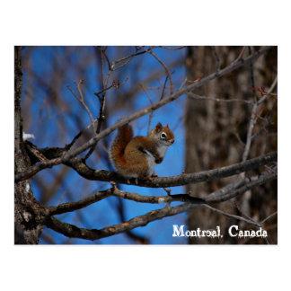 Cartão Postal Esquilo em Montreal