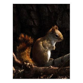 Cartão Postal Esquilo em um remendo da luz solar