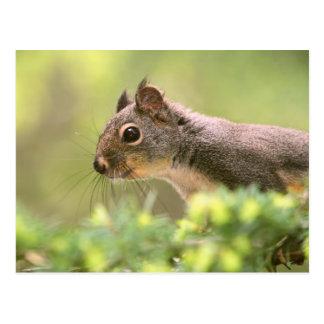Cartão Postal Esquilo em uma árvore
