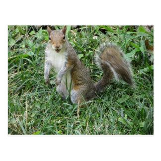 Cartão Postal Esquilo ereto
