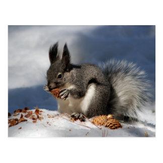 Cartão Postal Esquilo na neve