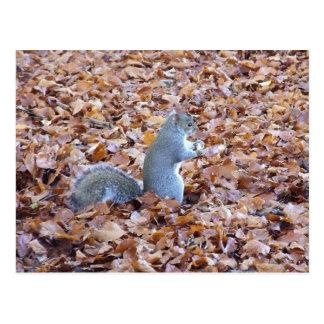 Cartão Postal Esquilo nas folhas de outono