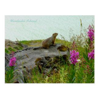 Cartão Postal Esquilo pela água, ilha de Parkee de Unalaska