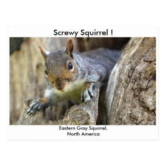 Cartão Postal Esquilo Screwy!