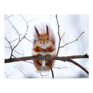 Cartão Postal Esquilo vermelho amigável
