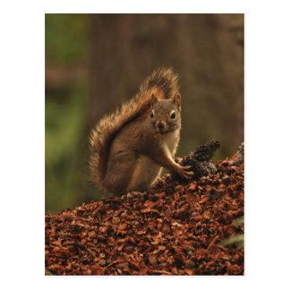 Cartão Postal Esquilo vermelho na pilha dos restos