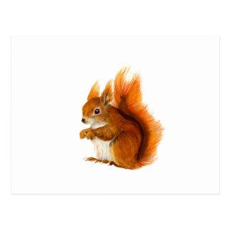 Cartão Postal Esquilo vermelho pintado na arte dos animais