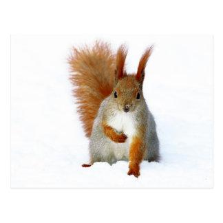 Cartão Postal Esquilo vermelho que senta-se na neve
