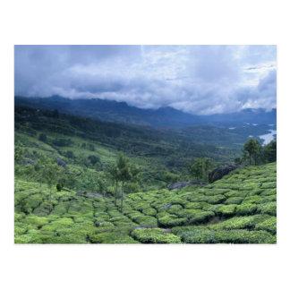 Cartão Postal Estado India de Kerala da plantação de chá 2