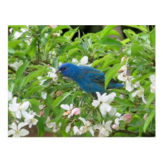 Cartão Postal Estamenha de índigo e flores - pássaro