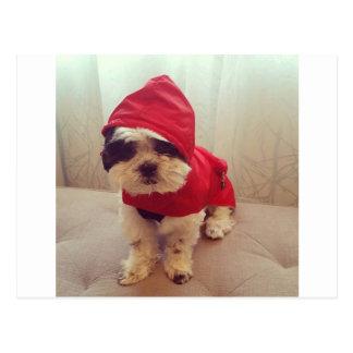 Cartão Postal Este cão deia a chuva