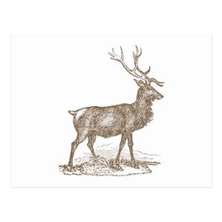 Cartão Postal Estilo da tipografia dos cervos de mula do